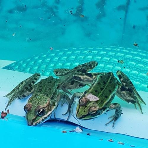 bouwkundig zwembad 5 x 10 meter zwembad genieten